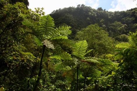 Martinique Dominica 160